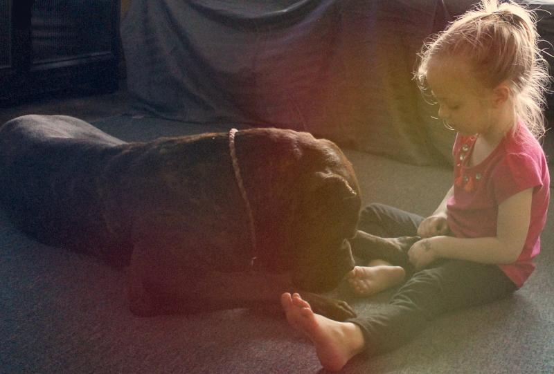 Cane Corso and Child